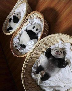 I wish they could be mine 😍 : aww Cute Funny Animals, Cute Baby Animals, Animals And Pets, Niedlicher Panda, Cute Panda, Schönbrunn Zoo, Baby Panda Bears, Tier Fotos, Fur Babies