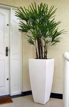 Árvore para apartamento