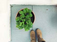 Succulents by rocketcandy, via Flickr