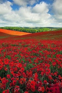 Wild Flowers Inspiration : A Poppy Field near the South Coast of England - Flowers.tn - Leading Flowers Magazine, Daily Beautiful flowers for all occasions Beautiful World, Beautiful Places, Beautiful Pictures, All Nature, Belle Photo, Beautiful Landscapes, Champs, Wonders Of The World, Wild Flowers