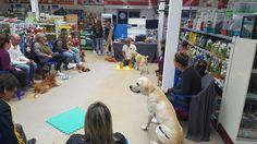 #taller para #perros #olfativo