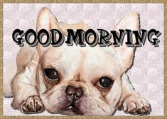 Free online Good Morning Dog Wishes ecards on Everyday Cards Good Morning Dog, Morning Hugs, Good Morning Cards, Morning Wish, Healing Wish, Warm Hug, Wishes For You, Get Well Cards, Name Cards