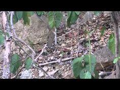 Bosque Seco de Guanica- Ecosistemas de PR