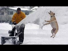 Why Does This Dog Has Fun In The Snow?? VIDEOhttp://www.fluffy1.com/why-does-this-dog-has-fun-in-the-snow-video/