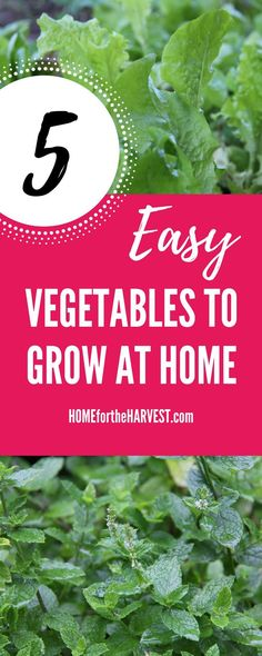 Gardening doesn't have to be hard! Some crops are very easy to grow, while others are almost impossible when you're new to gardening. Use this guide to learn which veggies to start with while you're learning to garden :)