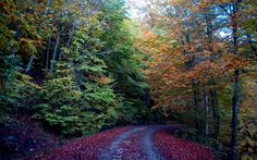 Autumn in Greece: Mount Pilio Parthenon, Acropolis, Mykonos, Santorini, Greek Flowers, Forest Mountain, Tree Forest, In Ancient Times, Flowering Trees