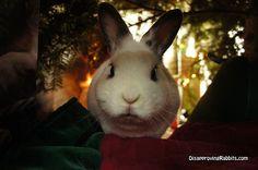 """""""I said no peeking!"""" - Furbie, Disapproving Rabbits"""