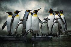 Penguin Huddle by Audran Gosling, via 500px
