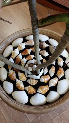 I love shells. But I wasn't sure what to do with all my collections. Then this idea came to me. They are arranged in big potted plants, right on top of the soil. I love the look and the memories of our sunny beach days.
