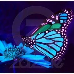 Butterfly in Blue Light Photo Sculpture