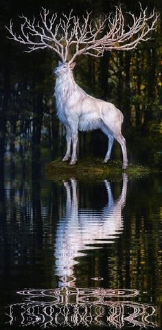 [The white deer. In Norwegian folklore, it is believed that if you catch him, he will grant you one wish.]