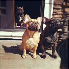 The smell of fresh air- frenchies are the best!!!