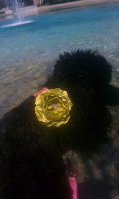 Dog Collar Flower AddOn for Your Custom Dog Collar by Dogologie, $10.50
