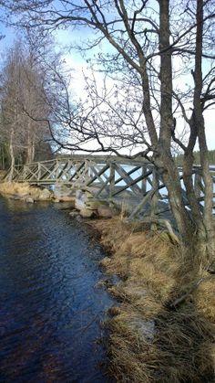 Liesjärven kansallispuisto, Kyynäräharjun silta
