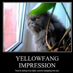 Yellowfang impression i think that is yellow fang in real life omg Warrior Cat Memes, Warrior Cats Books, Warrior Cats Art, Warrior Cats Funny, What Cats Can Eat, I Love Cats, Cute Cats, Funny Cats, Gatos Serval