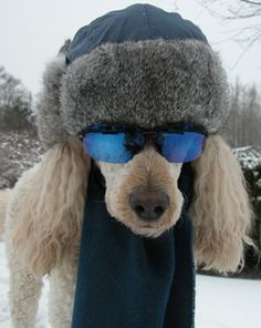 I want my poodles to come to the snow