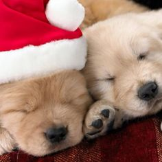 All I want for christmas is you!!