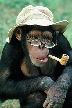 monkey grandpa