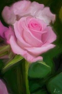 rosa paint