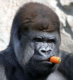 gorilla - Поиск в Google
