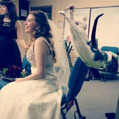 I really hope this never ever happens to me... But why would you bring your cat to your wedding?