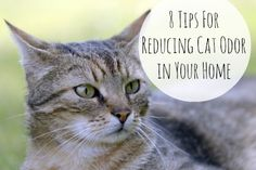 If you have cats, there is probably a time or two your house reeked of cat odor. Here are some tips for eliminating the smell and reducing that odor.