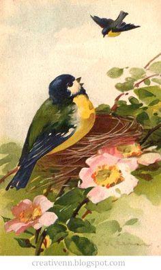 На крыльях вдохновения. : Catherine Klein. Птицы.