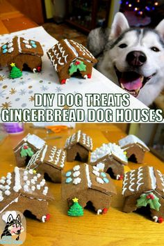 DIY Gingerbread Dog Houses for Christmas!  Just in time for the Holidays!  Let's make some Gingerbread treats for the dogs!