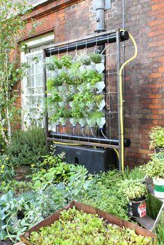 Verticale hydroponische tuin met plastic flessen.