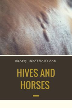 Hives and horses - why they happen and what you can do. Chase down a possible cause with your Veterinarian, like an allergy or reaction or inflammatory problem, and go from there to treat your horse's hives. Western Horse Tack, Western Saddles, Horse Information, Horse Stalls, Horse Barns, Horse Care Tips, Horse Riding Tips, Horse Anatomy, Horse Grooming