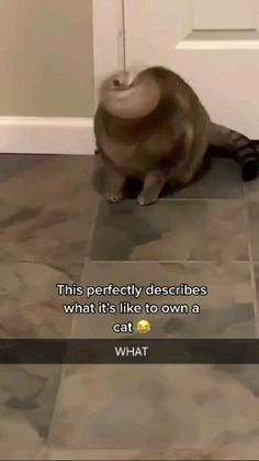 Crazy Funny Videos, Funny Animal Videos, Animal Memes, Cute Baby Dogs, Baby Cats, Cute Puppies, Cute Little Animals, Cute Funny Animals, Cute Cats