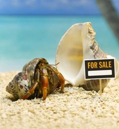 Hermit crabs move into a smaller shell before molting, then into a larger shell after molting.