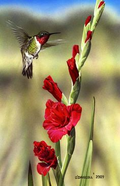 "Saved from board ""Birds"" by Jennieroses…Wonderful bird art…This pin: Gladiola and Hummer by Wildlife Artist Danny O'Driscoll Pretty Birds, Love Birds, Beautiful Birds, Animals Beautiful, Hummingbird Tattoo, Hummingbird Pics, Tier Fotos, Little Birds, Wild Birds"