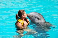 Swim with Dolphins - Bucket List Dream from TripBucket