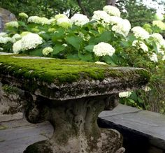{Garden} Recipe for growing moss in the garden, and a winner Gray Garden, Shade Garden, Garden Art, Garden Design, Succulent Planters, Hanging Planters, Succulents Garden, Growing Moss, Garden Cottage