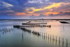 Cigu oyster fields 七股蚵田 by Thunderbolt_TW, via Flickr