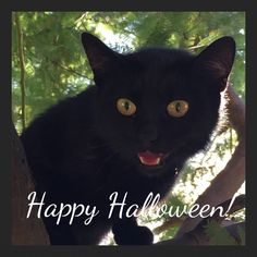Don't be scared! This is Sapphire who lives amongst the olive groves at Casal Cristiana in Italy. It's her job to keep the wild beasts away! Dont Be Scared, Panther, Happy Halloween, Olive Oil, Beast, Sapphire, Italy, Animals, Christians