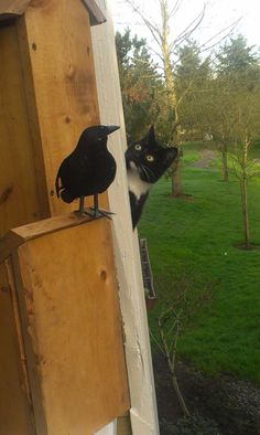 Cats gonna be upset when it figures out the crow is fake.
