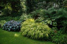Für den Schatten die erste Wahl ist das Japanwaldgras, Hakonechloa macra, hier in der Sorte 'Aureola'. Die klassische Kombination mit blauen Hosta und Hostas, welche die Farben des Grases aufgreifen, ist wunderschön anzusehen und lässt sich sogar in einem kleinen Topfgarten auf einem Balkon nachempfinden. - The Beth Chatto Gardens