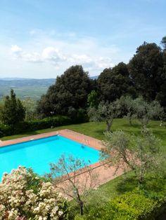 piscina e olivi