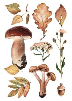Watercolor illustrations of mushrooms and leaves on Behance Botanical Drawings, Botanical Prints, Watercolor Illustration, Watercolor Art, Watercolor Stickers, Watercolor Plants, Mushroom Art, Collage Art, Art Inspo