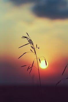 Fragile sunset