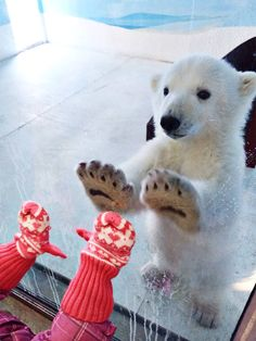 Polar Bear and Little Kid. :)
