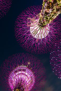 Gardens by The Bay is where you can chill and relax while strolling Singsapore's flora and fauna. If you are looking for travel packages in Singapore, visit our site, www.tripovo.com