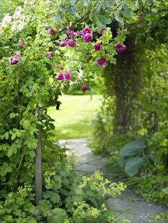 Trädgård, Garden, Giardino