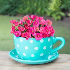 307065-Teapot-planter-BLUE
