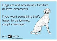 Dogs are not accessories, furniture or lawn ornaments. If you want something that's happy to be ignored, adopt a teenager. #someecards #yourecards #dogs #animals #pets
