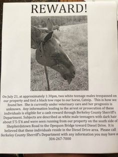 Reward offered for West Virginia horse strangled: Two teens seen running away