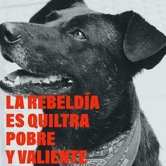 Para que tu cachorro cresta fuerte... Sano y aguerrido como el gran #negro... Best Frieds, Art Inspo, Movie Posters, Stickers, Punk, Kitchen, Gift, Amor, Protest Art