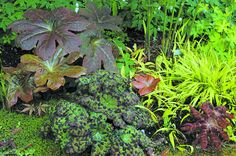 Everything you need to know about Podophyllums